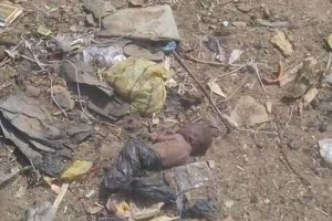 Newborn baby stuffed in plastic bag and abandoned in field in Kebbi State (Photos)