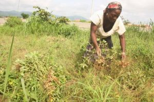 World Bank To Give $200 Million To Nigerian Farmers